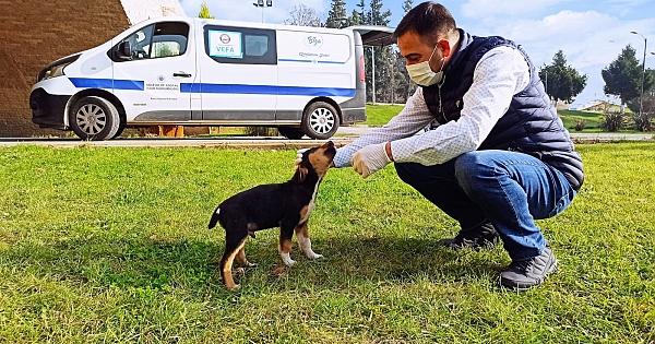 Biga Belediyesi sokak hayvanlarını unutmadı