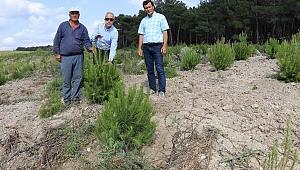 Ağaçlandırma sahalarında bakım çalışması