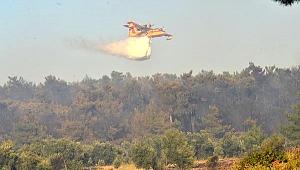 Geyikli'de orman yangını korkuttu