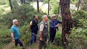 Orman zararlılarıyla mücadele ediliyor