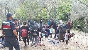 260 kaçak göçmen ile 7 organizatör yakalandı
