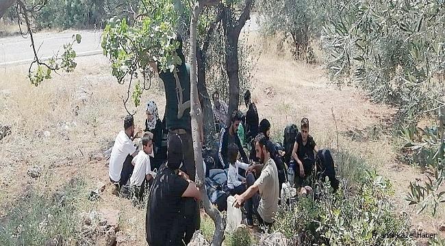 308 kaçak göçmen yakalandı