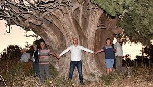 """""""Anıt ağaç olarak koruma altına alınmasını istiyoruz"""""""