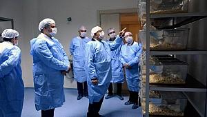 Rektör Murat laboratuvarları inceledi