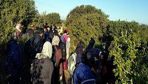 305 kaçak göçmen yakalandı