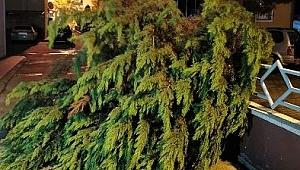 Fırtına nedeniyle ağaçlar devrildi