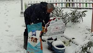 Çan Belediyesi sokak hayvanlarını unutmadı