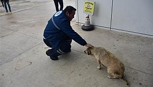 Hayvan dostu Biga Belediyesi
