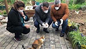 Başkan Arslan sokak hayvanlarını unutmadı