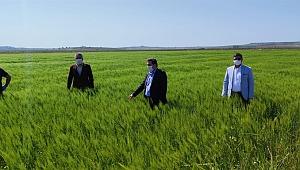 Vali Tavlı, batak ovasında çiftçilerle görüştü