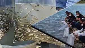 60 bin sazan balığı yavrusu göletlere bırakıldı