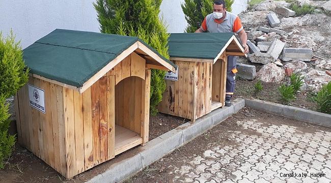 Biga Belediyesi sokak hayvanlarına çatı oluyor