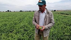 Biga'da tarım arazilerini dolu vurdu