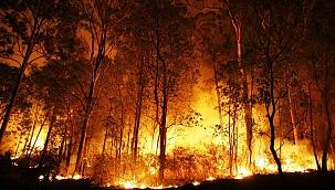 Türkiye'de orman yangınlarının yüzde 98'i insan kaynaklı