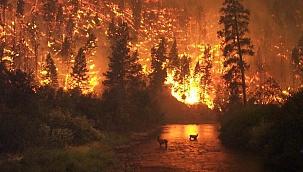 Çanakkale'de orman yangını sayıları her geçen yıl artıyor