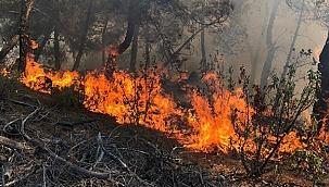 Çanakkale'de yangın !