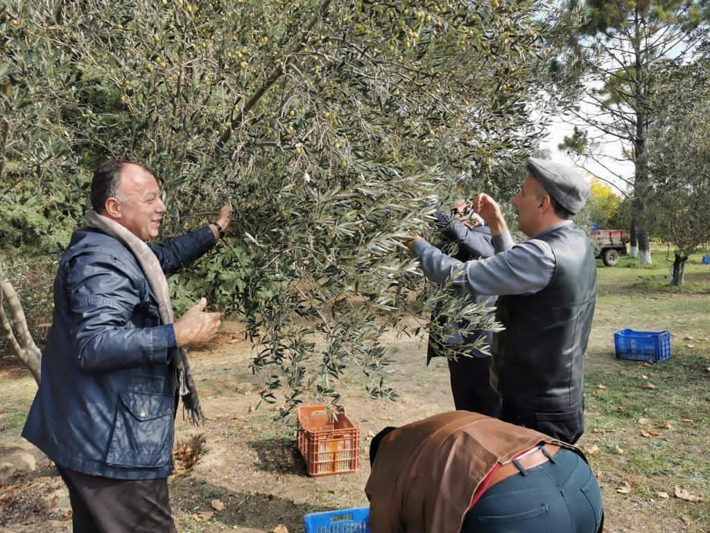 Başkan Semizoğlu, zeytin toplama ve hasat etkinliğine katıldı