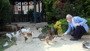 Akdeniz'deki parklara sokak hayvanları için uyarıcı levhalar dikildi