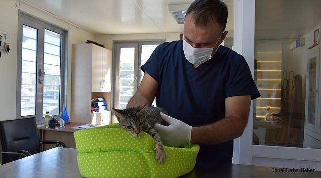 Aliağa'da 2020 yılında 4 bin 72 sokak hayvanının bakım ve tedavisi yapıldı