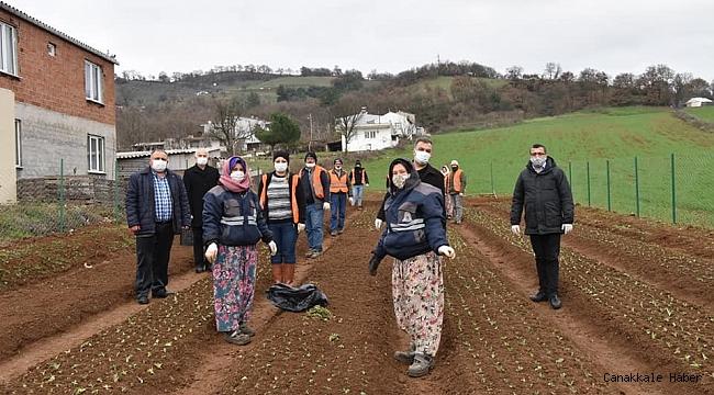 Çan Belediyesi salep fidanlarını toprakla buluşturdu
