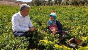 Canbey'den afetzede çiftçilere güzel haber