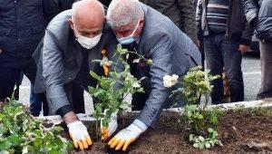 Güllübahçe Mahallesi yıllar sonra adını aldığı güllerine kavuşuyor