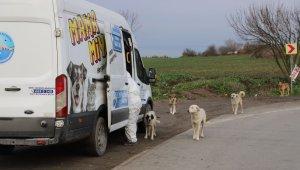 Kısıtlama günlerinde Büyükçekmece'deki sokak hayvanları yalnız bırakılmıyor