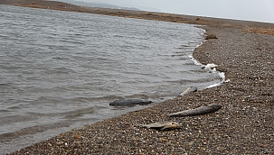Korkutan balık ölümleri