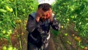 Kumlucalı çiftçiden 'kış domatesini yemeyin' diyen doktora klipli cevap