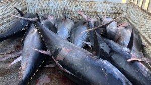 Mersin'de avlanması yasak mavi yüzgeçli orkinos balığı ele geçirildi