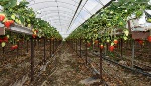 Meyve ve sebze deposu Mersin, 9 üründe Türkiye birincisi