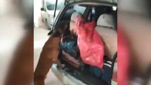 Narkotik köpeği gizlenen 2 kilo 700 gram esrarı böyle buldu