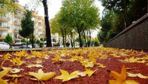 Sonbahara veda edemeyen şehir, sarıya büründü