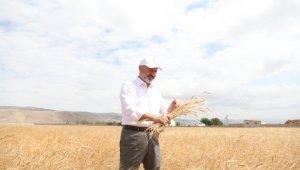 Toprak ve çiftçi dostu Başkan Çolakbayrakdar'ın milli ve yerli tohum hamlesi takdir topladı