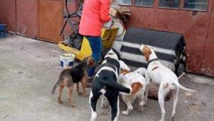 Akçakoca Belediyesinden sokak hayvanlarına mama desteği