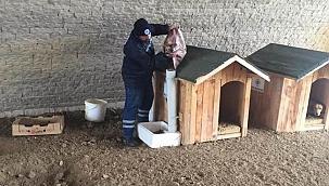 Biga Belediyesi soğuk havalarda da sokak hayvanlarının yanında