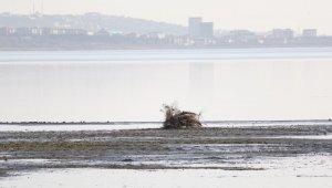 Büyükçekmece gölünde korkutan görüntü: Suyun çekildiği alanda yeni kıyı seti oluştu