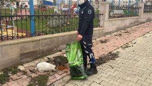 Ergene Belediyesi sokak hayvanlarını yalnız bırakmıyor