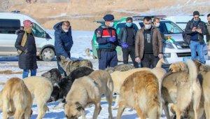 İpekyolu Belediyesinden sokak hayvanlarına sevgi eli