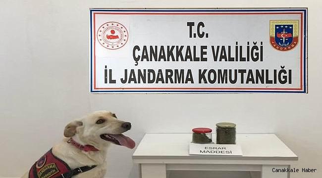 Jandarma'dan Ezine'ye uyuşturucu baskını