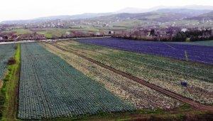 Kışlık sebzede çiftçinin altın yılı