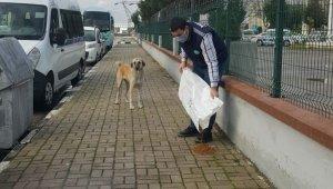 Manisa'da sokak hayvanlarına mama desteği