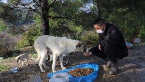Menderes'te sokağa çıkma kısıtlamasında sokak hayvanları unutulmadı