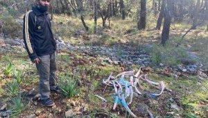 Ormanlık alanda zehirli kemikler bulundu