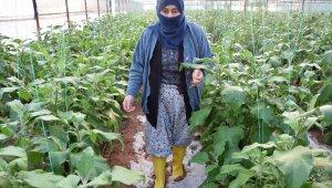 """Serası dolu nedeniyle zarar gören kadın çiftçinin tepkisi: """"Patlıcan pahalı diyenler şu halimize baksınlar"""""""