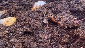 Sincan belediyesi solucan gübresi ve kurtçuk üretimine başladı