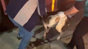 Sulama kanalına düşen köpeği itfaiye ekipleri kurtardı