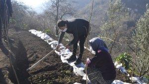 Trabzon'da ilk kez dikimi yapıldı