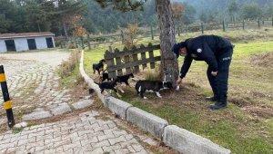 Yenice'de Emniyet ekipleri sokak hayvanlarını unutmadı