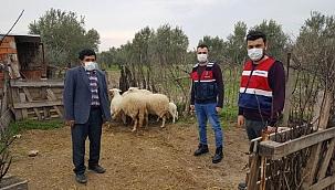 Çalınan 6 koyun jandarma tarafından bulundu